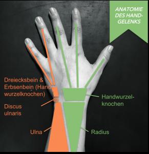 """""""Radiusseitige Hand': Daumen, Zeige- und Mittelfinger sind über die Handwurzelknochen mit dem Radius verbunden, """"ulnarseitige Hand"""": Ringfinger und kleine Finger sind über das Erbsen- und Dreiecksbein mit der Ulna verbunden"""
